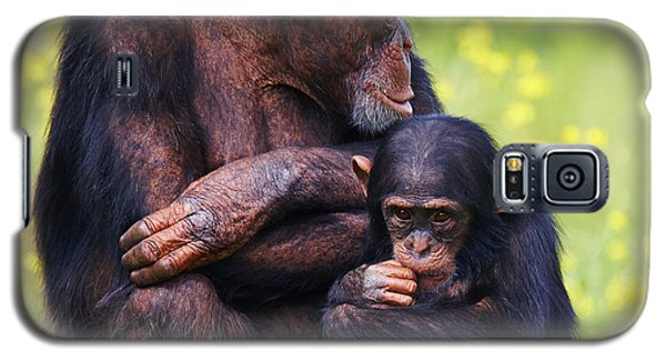 Galaxy S5 Case featuring the photograph Young Chimpanzee With Adult by Nick  Biemans