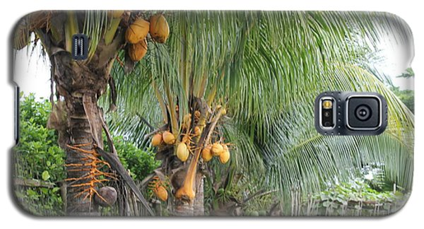 Young Coconut Trees Galaxy S5 Case