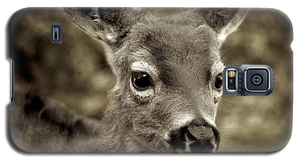 Young Curious Deer Galaxy S5 Case by Alex King