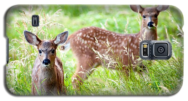 Galaxy S5 Case featuring the photograph Young Deer by Crystal Hoeveler
