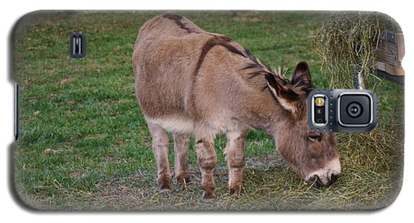 Young Donkey Eating Galaxy S5 Case by Chris Flees