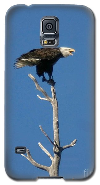 Galaxy S5 Case featuring the photograph Young Eagle by Mitch Shindelbower