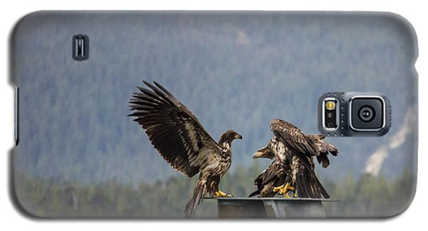 Young Eagles Galaxy S5 Case by Timothy Latta