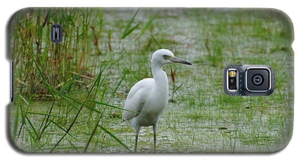 Juvenile Little Blue Heron At Willow Pond Galaxy S5 Case
