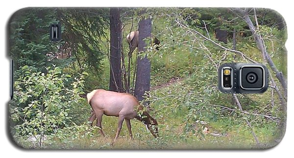 Galaxy S5 Case featuring the photograph Young Elk Grazing by Fortunate Findings Shirley Dickerson