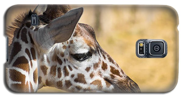 Young Giraffe Galaxy S5 Case