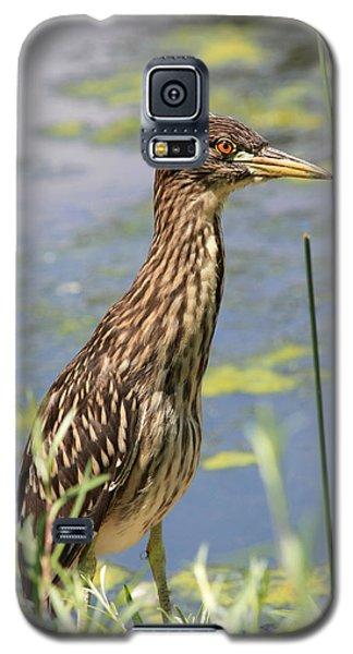 Young Heron Galaxy S5 Case