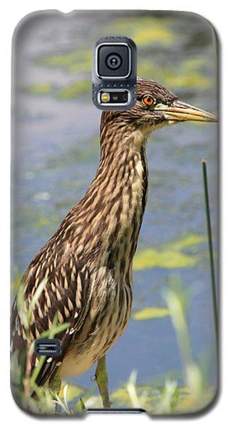 Young Heron Galaxy S5 Case