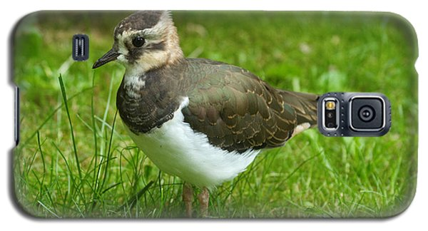 Young Lapwing Galaxy S5 Case