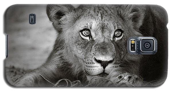 Lion Galaxy S5 Case - Young Lion Portrait by Johan Swanepoel