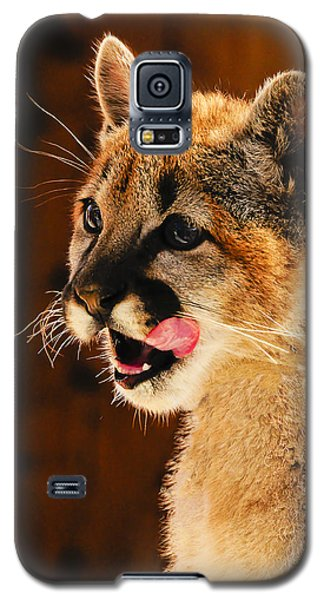 Young Mountain Lion Galaxy S5 Case