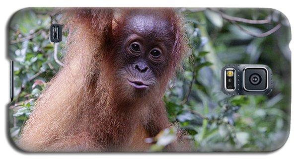 Young Orangutan Kiss Galaxy S5 Case