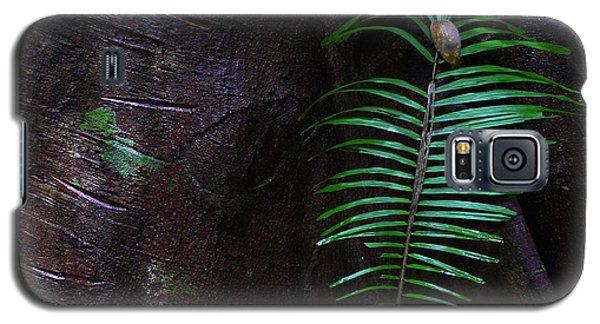 Palm Leaf Against Tree Galaxy S5 Case