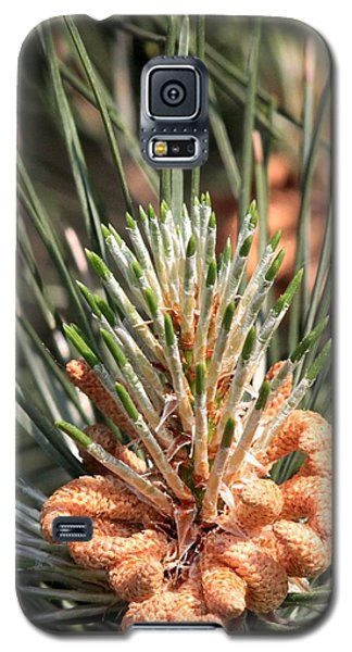 Galaxy S5 Case featuring the photograph Young Pine Cone  by Ramabhadran Thirupattur