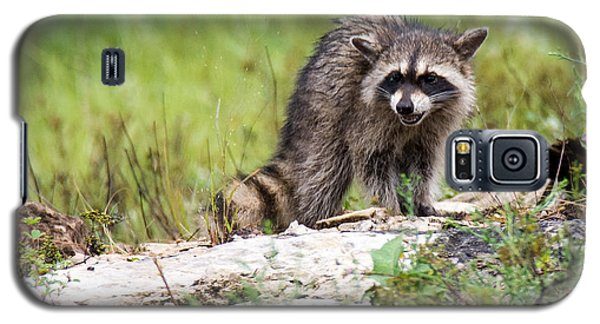Young Raccoon Galaxy S5 Case