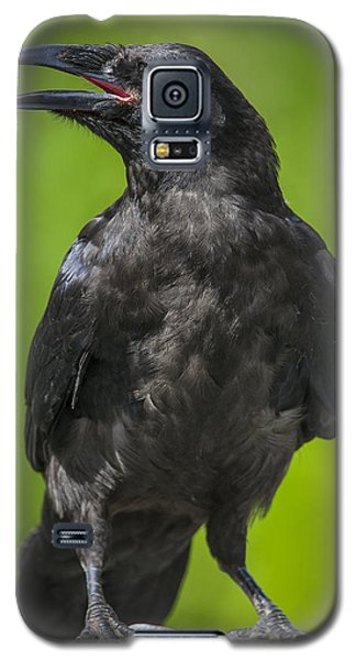 Raven Galaxy S5 Case - Young Raven by Tim Grams
