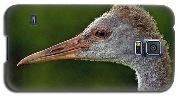 Young Sandhill Crane Galaxy S5 Case