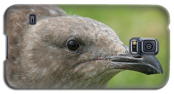 Galaxy S5 Case featuring the photograph Young Seagull by Bob and Jan Shriner