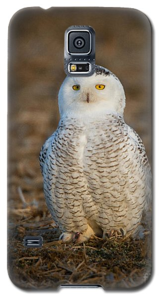 Young Snowy Owl Galaxy S5 Case