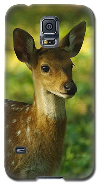 Galaxy S5 Case featuring the photograph Young Spotted Deer by Jacqi Elmslie