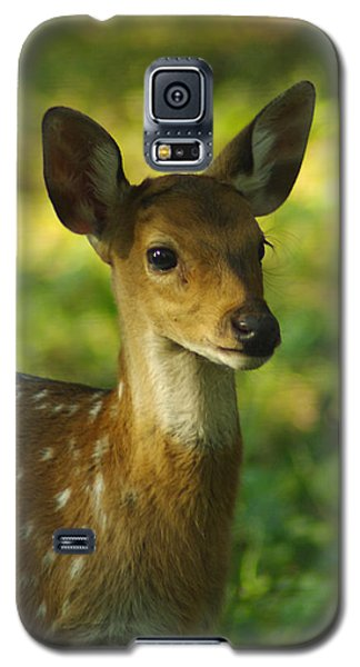 Young Spotted Deer Galaxy S5 Case by Jacqi Elmslie