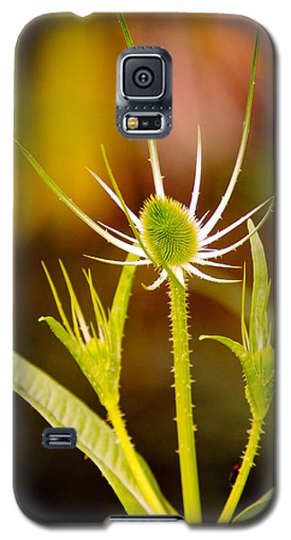 Galaxy S5 Case featuring the photograph Young Thistle by Janis Knight