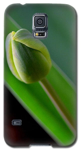 Young Tulip Galaxy S5 Case by Lisa Phillips