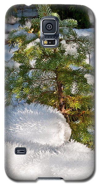 Young Winter Pine Galaxy S5 Case