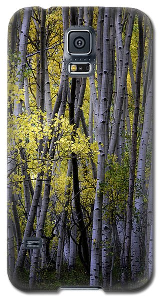 Galaxy S5 Case featuring the photograph Young Aspens by The Forests Edge Photography - Diane Sandoval