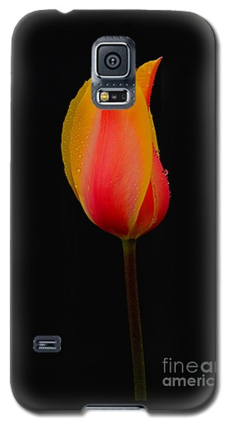 You're The One Galaxy S5 Case by Nick  Boren