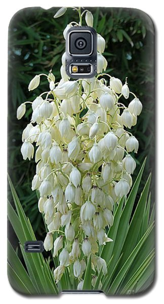 Yucca Blossoms Galaxy S5 Case by Christiane Schulze Art And Photography