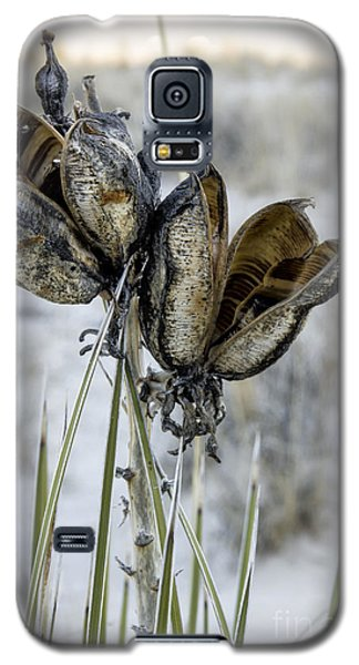 Yucca Seed Pods Galaxy S5 Case