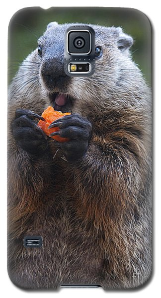 Yum-yum Galaxy S5 Case by Paul W Faust -  Impressions of Light