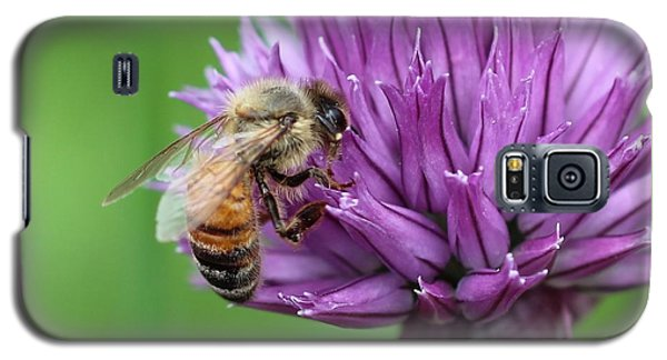 Yummm Chive Nectar Galaxy S5 Case