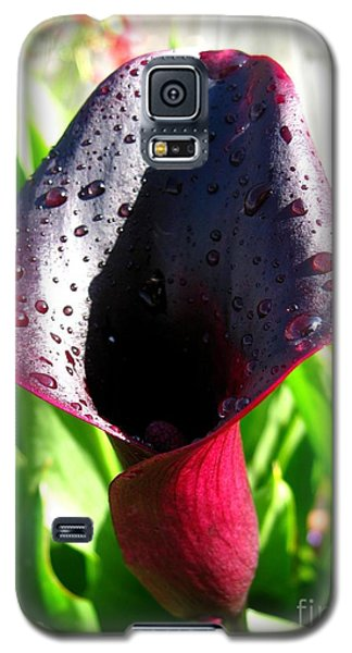 Galaxy S5 Case featuring the photograph Zantedeschia Named Black Forest by J McCombie
