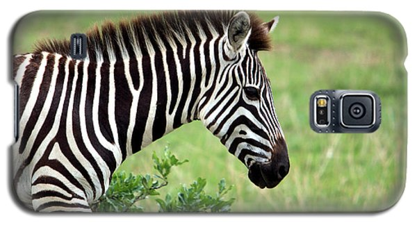 Zebra Galaxy S5 Case by Aidan Moran