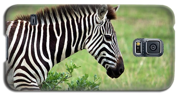 Zebra Galaxy S5 Case by Aidan Moran