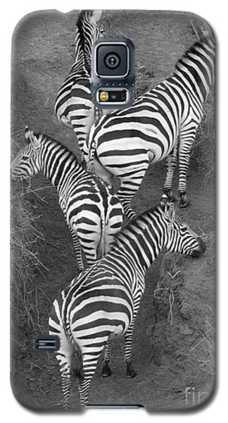 Zebra Design Galaxy S5 Case