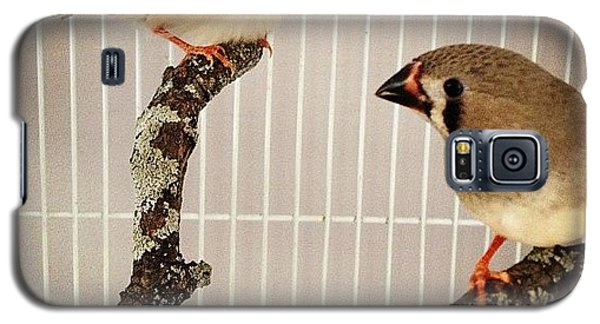 Zebra Finches Galaxy S5 Case by Christy Beckwith