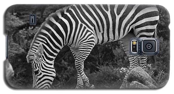 Zebra In Black And White Galaxy S5 Case