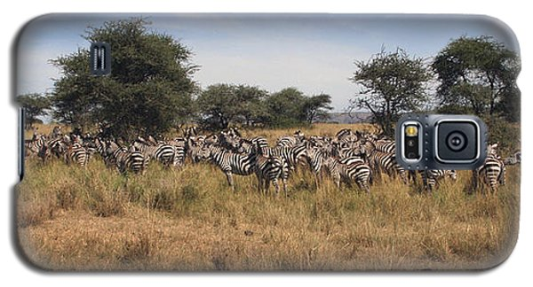 Galaxy S5 Case featuring the photograph Zebra by Joseph G Holland