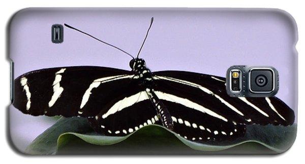 Zebra Longwing Butterfly Galaxy S5 Case