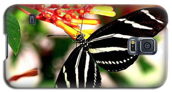 Zebra Longwing Butterfly Galaxy S5 Case