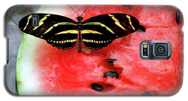 Zebra Longwing Butterfly On Watermelon Slice Galaxy S5 Case