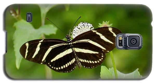 Zebra Longwing Galaxy S5 Case