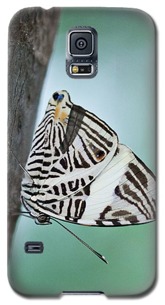 Galaxy S5 Case featuring the photograph Zebra Mosiac Butterfly by Zoe Ferrie