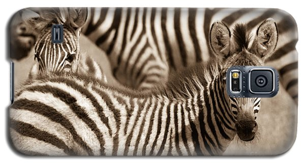 Zebra Stripes Galore Galaxy S5 Case by Chris Scroggins