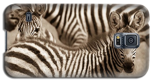 Zebra Stripes Galore Galaxy S5 Case