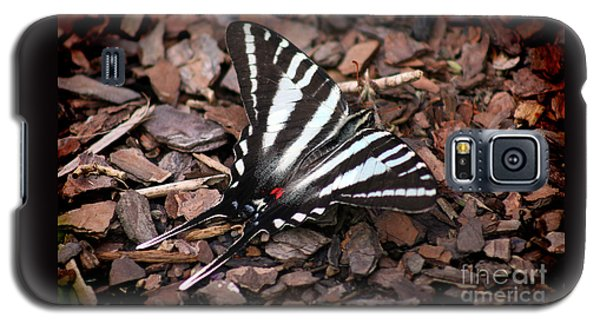 Zebra Swallowtail Butterfly Galaxy S5 Case