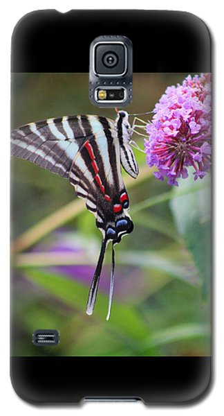 Zebra Swallowtail Butterfly On Butterfly Bush  Galaxy S5 Case
